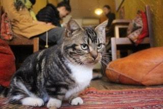 |大阪|ゲストハウス|マンチカン猫と一緒にゆるーく生活。大阪で国際交流しませんか(家賃無料)