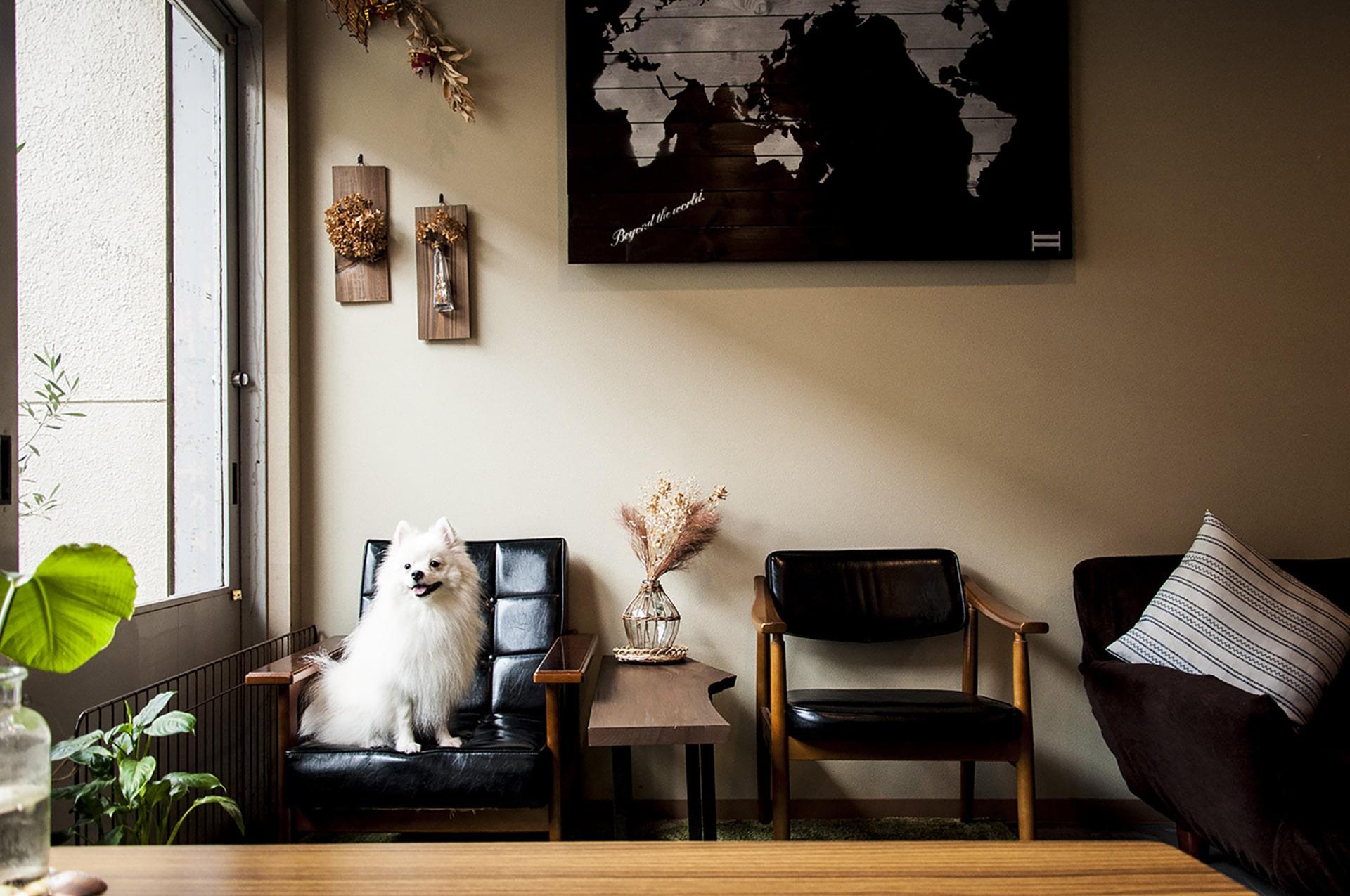 |京都|ゲストハウス|【食事補助1万円/月】犬好きおすすめ!オシャレホステルと京町家ゲストハウスの両方が経験できます!